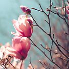 spring is here by Carina Potts