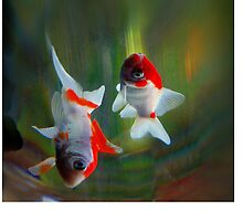 colorful fish by dale54