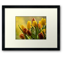 """""""St Clements"""" Tulips Framed Print"""