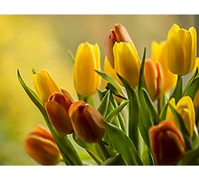 """St Clements"" Tulips Photographic Print"