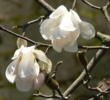 ~spring bells~ by LisaBeth