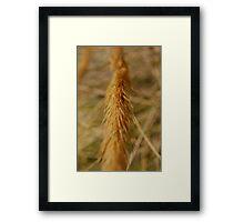 Corn Spike Framed Print