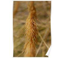 Corn Spike Poster