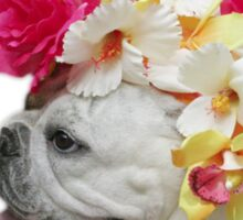 Party Animal!  Bulldog with Flower Bonnet Sticker