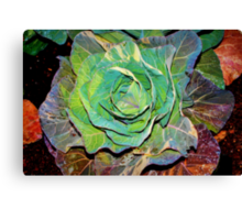 Cabbage beauty Canvas Print