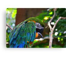 Macaw - Cincinnati Canvas Print