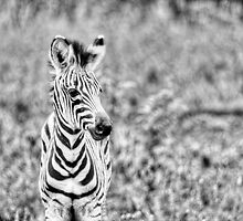 Young Stripes by vivsworld
