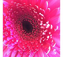 pink one Photographic Print