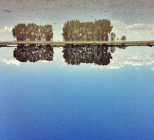 upside down by claudioasile