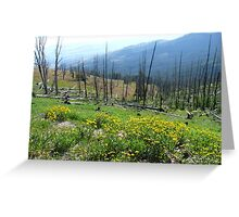 Nature Tree Valley Greeting Card