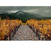 Viñas de Poblet / Wine valey from Catalonia Photographic Print