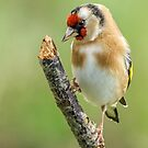 Goldfinch. by Mark Hughes