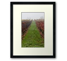 vineyard in the fog in autumn Framed Print
