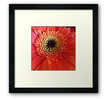 orange and yellow one Framed Print