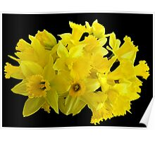 Daffodil Delight Poster