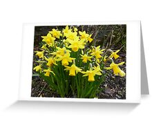 Daffodils In The Spring Sunshine Greeting Card