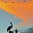 Pelican and New Moon Sunset by George Petrovsky