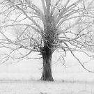 branching out by dc witmer