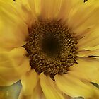 Sunny flower (For Christine) by vigor