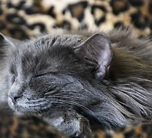 Caught Cat Napping! by heatherfriedman