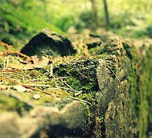 Moss filled findings by johnkimages