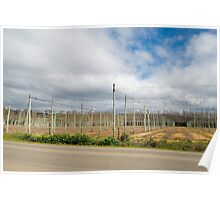 fruit vines Poster