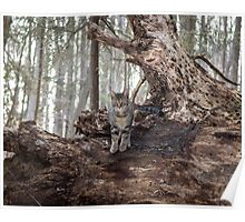 A Woodland Throne Poster