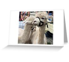 Llama affection Greeting Card