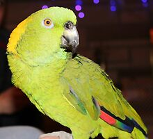 Colorful Parrot by smithmansell