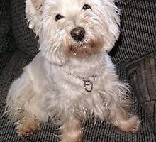 Happy Westie by smithmansell