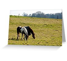 Grazing in the grass is a gaz..... Greeting Card