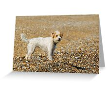 Jack Russell on beach Greeting Card