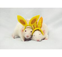 Easter rats Photographic Print