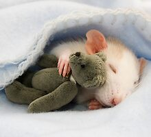 Baby rat with teddy by necilbug