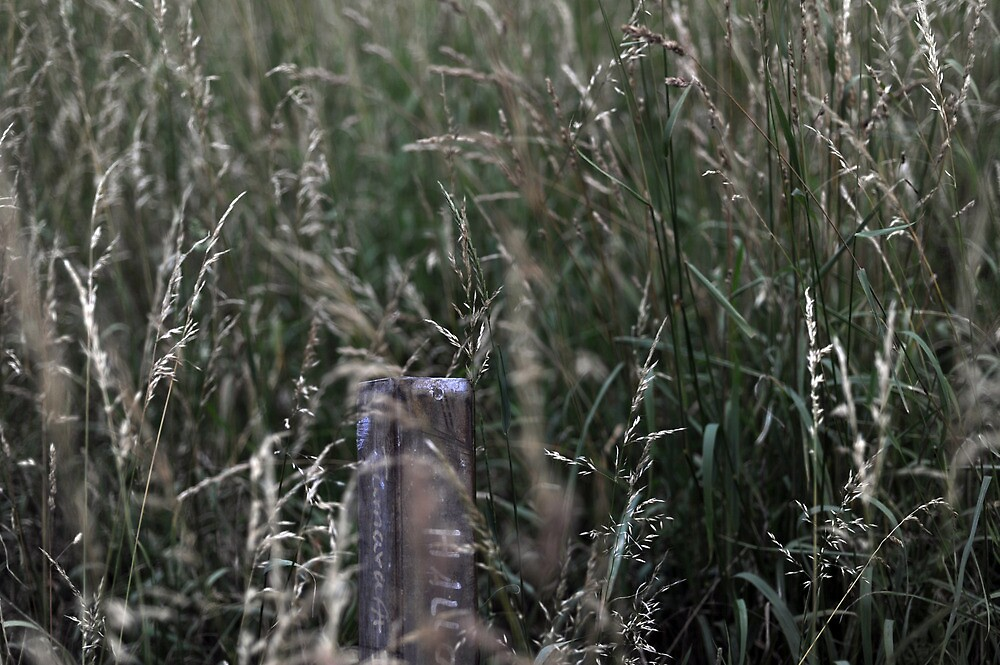 Grass by Benedikt Amrhein