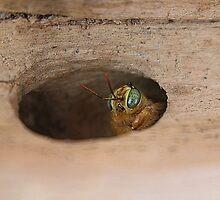 Peek-A-Boo by Laurie Puglia