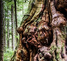 king of the gnarled by maria miller