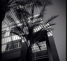 Building and Palm by Roger Passman