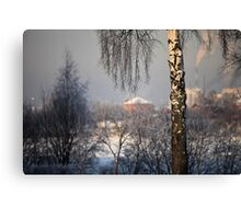 birch tree in winter Canvas Print