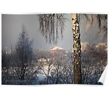 birch tree in winter Poster