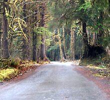 Rainy Road by Loisb