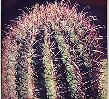 Red Spine Barrel Cactus I by Roger Passman