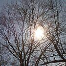 Sun Shining Through Trees by Joy Fitzhorn