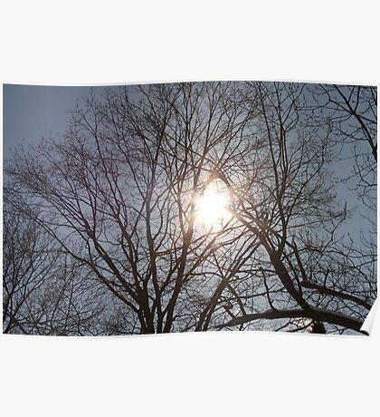 Sun Shining Through Trees Poster