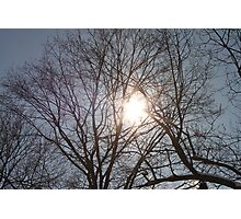 Sun Shining Through Trees Photographic Print