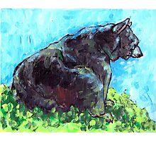 Bear on Mountainside Photographic Print