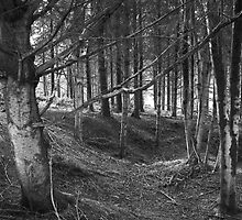 Woods #1 by Antony R James