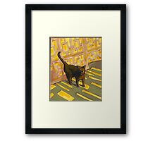 Black Cat in strong early evening light Framed Print