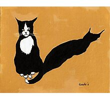 Tuxedo Cat in Strong Noon Light Photographic Print