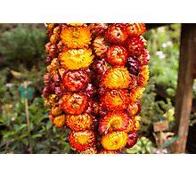 Panagbenga 2014 flower display Photographic Print